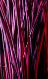 Naturaleza violeta Imágenes de archivo libres de regalías