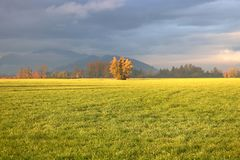 Naturaleza y Autumn Morning Sunlight fotos de archivo libres de regalías