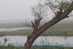 Naturaleza y belleza de Bangladesh foto de archivo