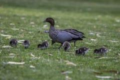 Naturaleza y fauna Fotos de archivo