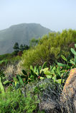 Naturaleza y flora de Tenerife Imagenes de archivo
