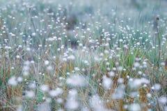 Naturaleza y flores imagen de archivo libre de regalías
