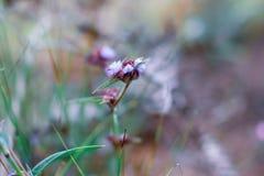 Naturaleza y flores fotografía de archivo libre de regalías