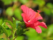 Naturaleza y flores en un jardín tropical Foto de archivo