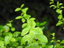 Naturaleza y gotas de lluvia fotografia de stock