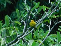 Naturaleza y pájaro foto de archivo libre de regalías