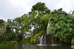 Naturalis fresh green water fall Stock Images