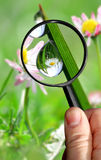 Naturalist. With magnifying glass looking for some dew Stock Image