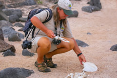 Naturalist guide showing skeleton of an animal on North Seymour. Island in Galapagos National Park, Ecuador Stock Images