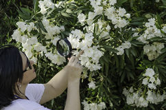 Naturalist watching the white oleander flowers royalty free stock image