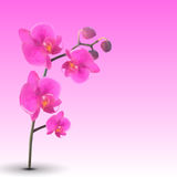 Naturalistic Beautiful Colorful Pink Orchid.Vector Illustration. Stock Images