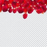 Naturalistiska Rose Petals på genomskinlig bakgrund också vektor för coreldrawillustration stock illustrationer