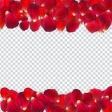 Naturalistiska Rose Petals på genomskinlig bakgrund också vektor för coreldrawillustration vektor illustrationer