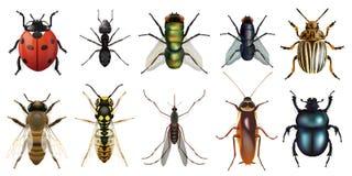 Naturalistyczna deska przedstawia dziesięć głównych insektów ilustracja wektor