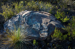 Naturally Carved Rock with Lichen In the Australian Bush royalty free stock photography