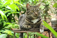 Naturally cat stock photography