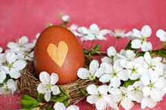 Naturally colored Easter egg in nest Royalty Free Stock Photos