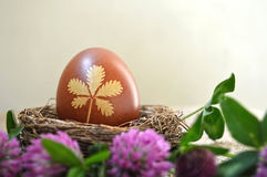 Naturally colored Easter egg and red clover flowers Royalty Free Stock Images