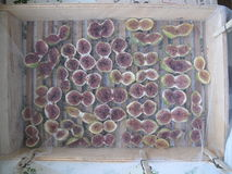Naturally dried figs under the summer sun Royalty Free Stock Images