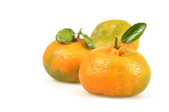 Naturally Ripened Tangerines Stock Images