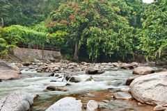 Naturally undeveloped river in Bentong, Pahang, Malaysia. Janda Baik is a popular place for meditation due to the nature peaceful environment Stock Images