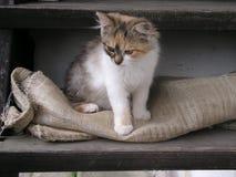 Naturalmente gattino sveglio Fotografie Stock Libere da Diritti