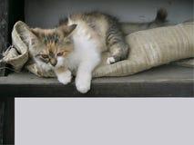 Naturalmente struttura sveglia del gattino fotografia stock libera da diritti