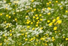 Naturalna łąka Zdjęcia Stock