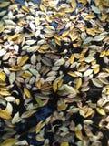 Naturalna świeża woda z ziołowymi liśćmi obraz stock
