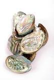 naturalna abalone skorupa Obrazy Royalty Free