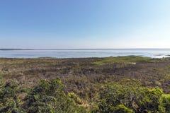 Naturalna bagna roślinność przy jeziora St Lucia Południowa Afryka obrazy royalty free