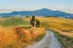 Naturalna biała nieociosana droga w Tuscany, Włochy Zdjęcie Stock