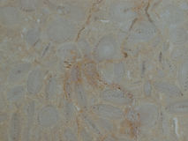 Naturalna bielu marmuru tekstura dla skóry płytki tapety fotografia royalty free