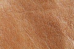 Naturalna brown skóra textured deseniowy tło makro- widok fotografia Zdjęcie Royalty Free