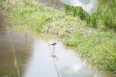 Naturalna ekologia ptaki zdjęcia royalty free