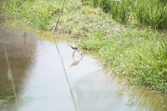 Naturalna ekologia ptaki zdjęcie stock