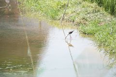 Naturalna ekologia ptaki obrazy royalty free
