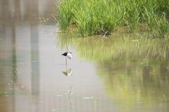 Naturalna ekologia ptaki fotografia royalty free