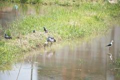 Naturalna ekologia ptaki obrazy stock