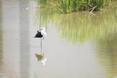 Naturalna ekologia ptaki obraz royalty free