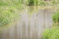 Naturalna ekologia ptaki zdjęcia stock