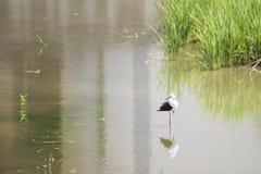 Naturalna ekologia ptaki zdjęcie royalty free