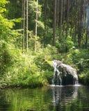 Naturalna fotografia Zdjęcia Stock