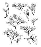 Naturalna gałąź i liście deseniujemy tło Zdjęcia Stock