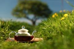 naturalna herbata Zdjęcie Stock