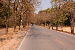 Naturalna krajobrazowa lokalna droga zdjęcia stock