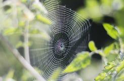 Naturalna pajęczyna między dwa gałąź w ogrodowym tle zdjęcia royalty free