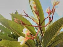 NATURALNA piękno kwiatu miłość obraz royalty free