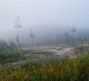 Naturalna ranek mgła Zdjęcia Stock