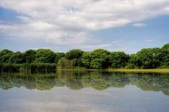 Naturalna rezerwa, Buenos Aires Zdjęcia Stock